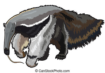 giant anteater,myrmecophaga tridactyla,wild animal of amazon...