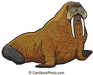 walrus,odobenus rosmarus,wild animal of arctic,illustration...