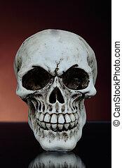 human skull - macabre human skull