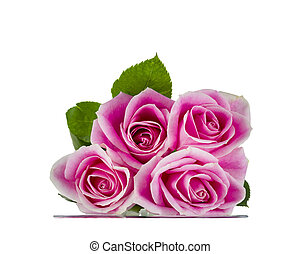 Pink Roses Resting on Glass - Pink long stem roses isolated...