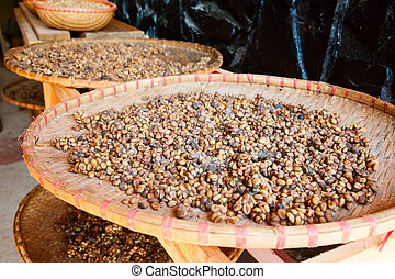 Kopi Luwak coffee beans - Civet feces with embedded coffee...