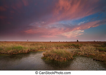 dramatic pink sunset over swamp