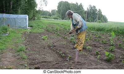 zucchini beds - grandmother handles hoe zucchini seedlings...