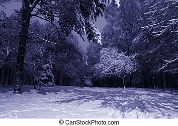 winter night landscape with dark snowy trees Park scene....