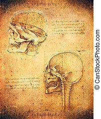 skull - da vinci style skull