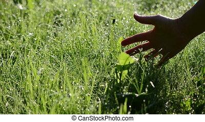 woman hand dew grass