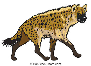 spotted hyena - spotted hyena,africa animal,side view...