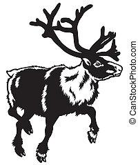 caribou black white - caribou reindeer,rangifer...