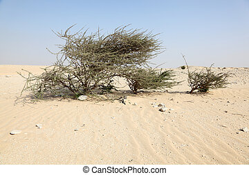 Tree the desert of Qatar, Middle East