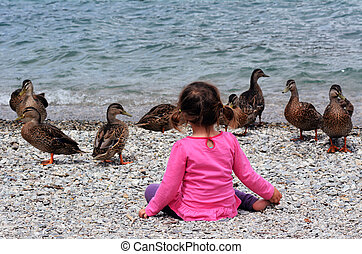 Child plays with ducks - Little girl plays with ducks on the...