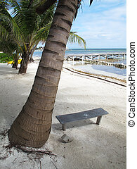 Palm Trees and Bench - A small wooden bench sits under a...