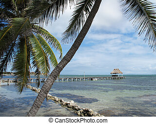 Palms and Rocks along the Shore - Palms and rocks along the...