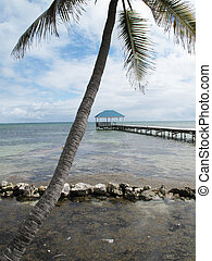 Palms & Rocks along the Shore - Palms and rocks along the...
