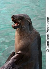 Seal with Open Mouth