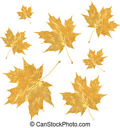 Golden Maple Leaves - Golden maple leaves in an abstract...