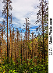 Dead trees - Dead tress in the Tatra mountains