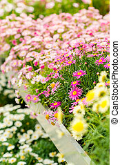 Colorful flowers at garden centre retail store - Colorful...