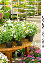 Potted flowers on table in garden shop - Potted flowers on...