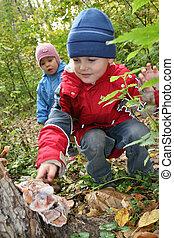 niños, explorar, estante, hongo