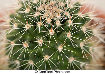 Quills and prickly cactus spines - macro detail of Quills...