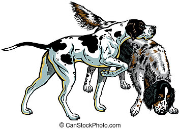 english pointer and setter gun dog breeds, illustration...