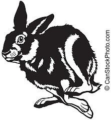 running european hare - running hare black and white...