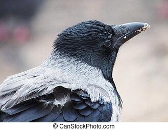 portrait of crows