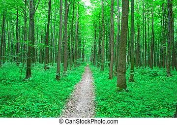 summer nature - nature. path in the green summer forest