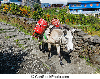 Donkey carrying two gas cylinders in Nepal