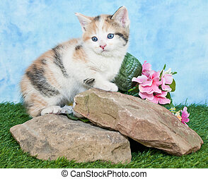 Calico - A sweet Calico kitten sitting on rocks with flowers...