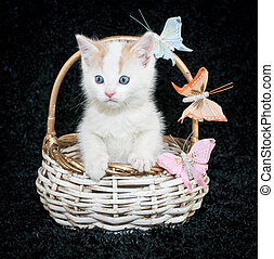 Butterfly Kisses - A sweet kiten sitting in a basket with...