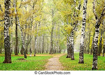 Morning mist in autumn birch forest