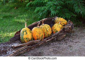 Pumpkins still-life