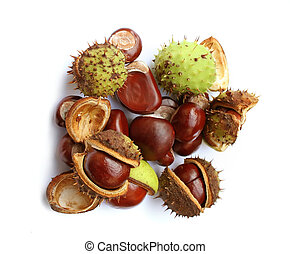 Autumn chestnuts on white background