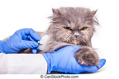 cat on admission to a veterinary clinic, a medical...