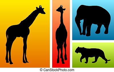 Animals from safari zoo on colorful backgrounds