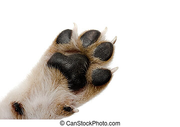 Paw - Close-up picture of dog paw - great footprints