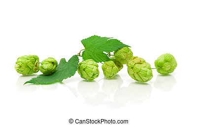 branch of hops on a white background with reflection...