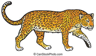 leopard - leopard,panthera pardus, side view illustration...