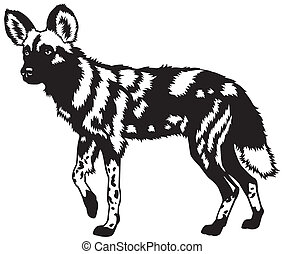 african wild dog black white - african wild dog,lycaon...