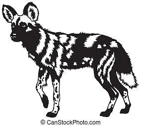african wild dog black white - african wild dog,lycaon...