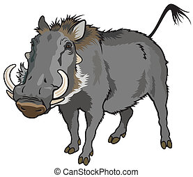 warthog - warthog,phocochoerus africanus, image isolated on...