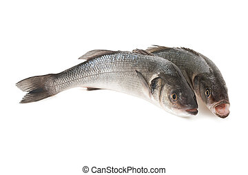 Sea bass - Two Sea bass isolated on white background