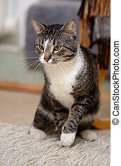 Gray yellow-eyed cat. Striped cat. Striped not purebred...