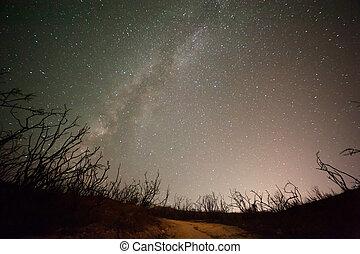 nuit, ciel, galaxie, Arbres