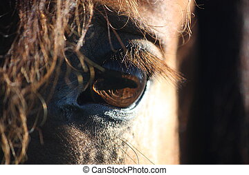 Brown horse eye and mane close up - Beautiful brown horse...