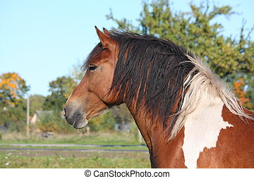 Portrait of beautiful skewbald horse - Portrait of beautiful...