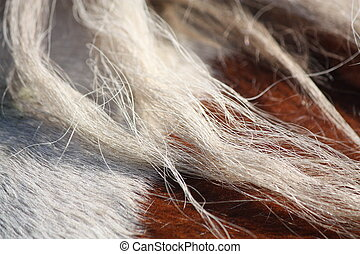 Brown and white horse mane close up - Piebald horse mane...