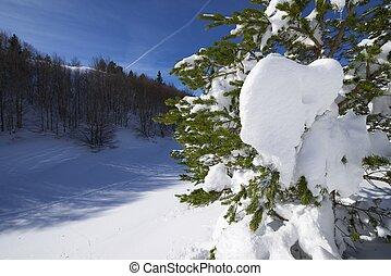 Winter - winter scene in the valley of Aspe, Pyrenees,...