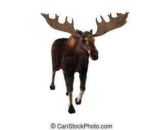 moose - image of moose
